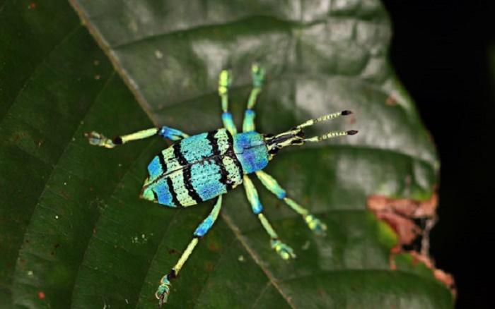 west-papua_0355